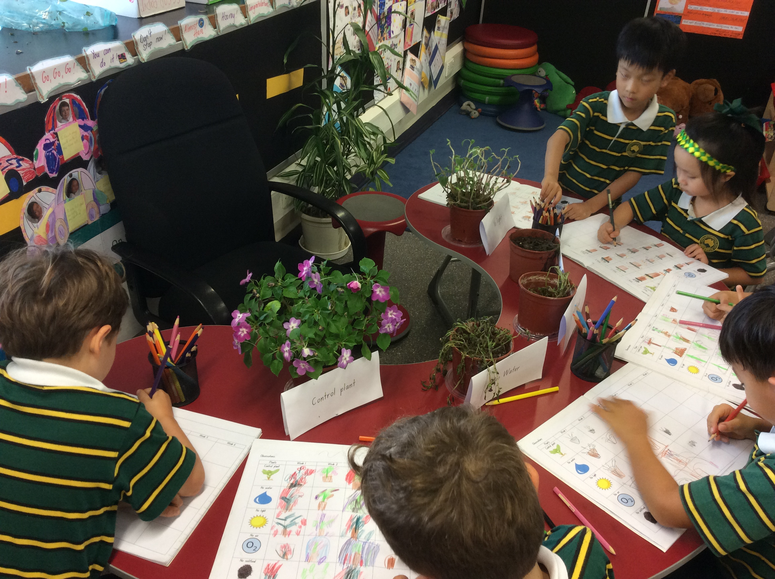 1M Plant Observations (1)