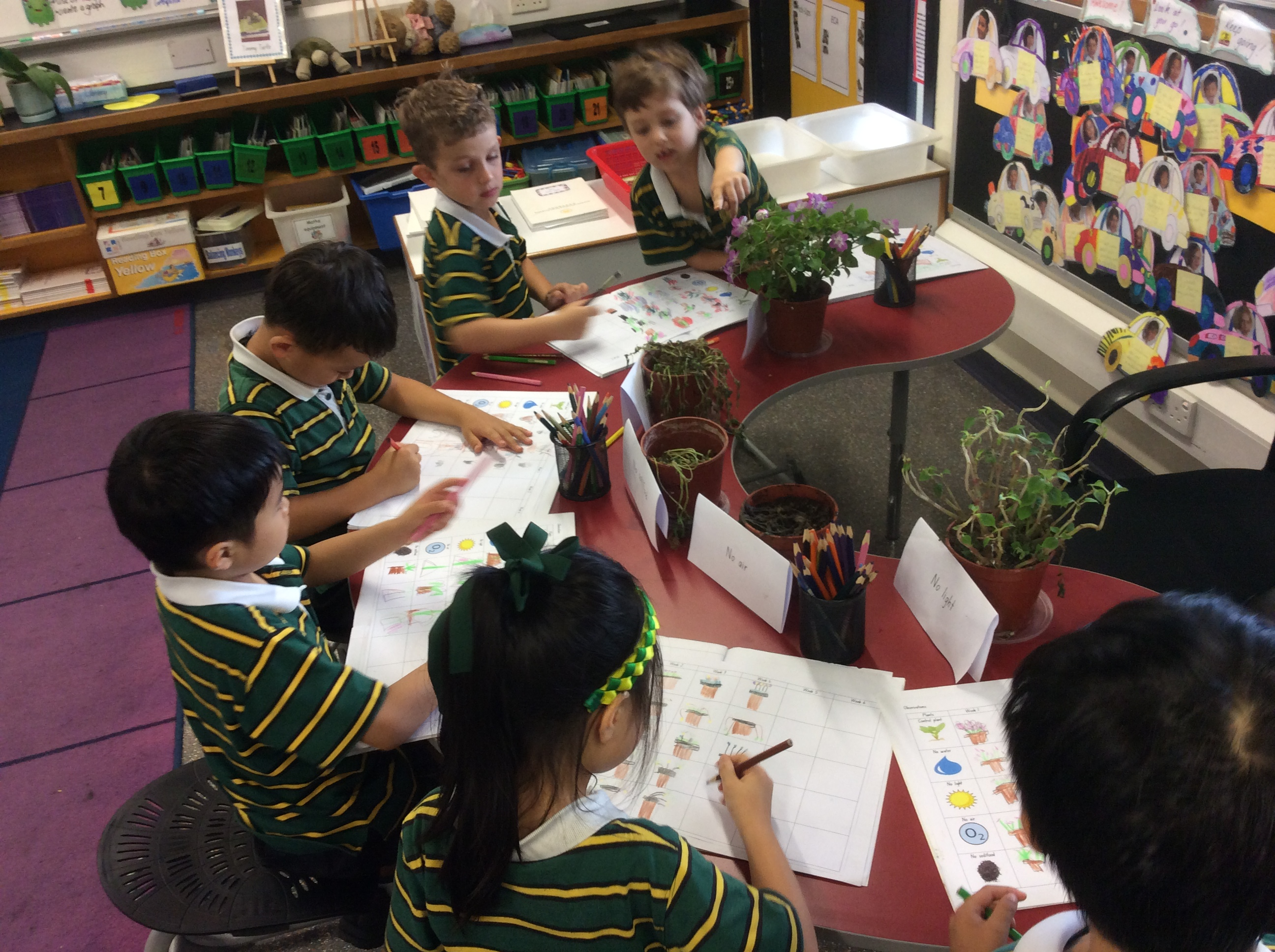 1M Plant Observations (2)